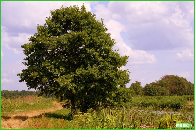 Mazovian Scenery - Blog1 (6)