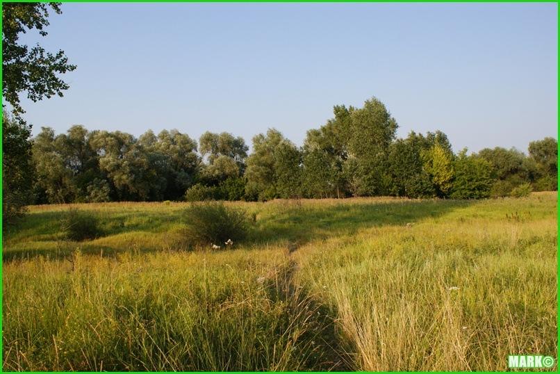 Mazovian Scenery - Blog1 (8)