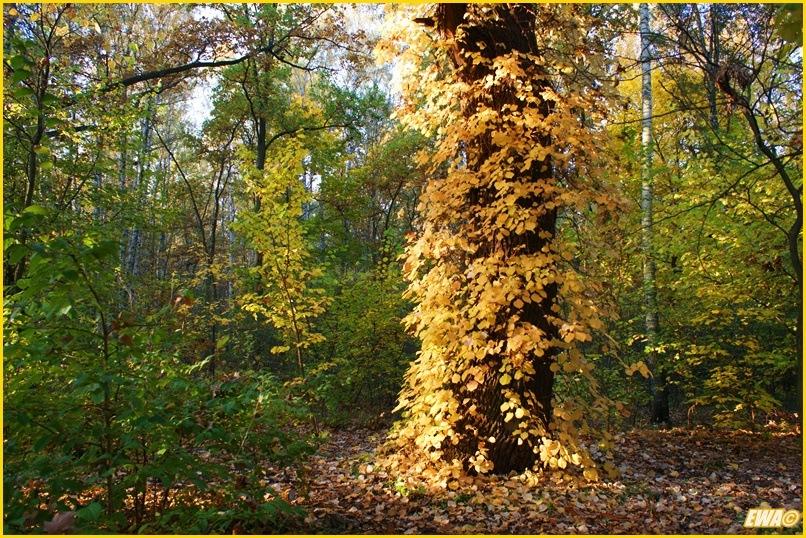 Kolory Jesieni - Blog 10