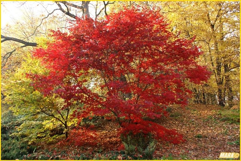 Kolory Jesieni - Blog 11