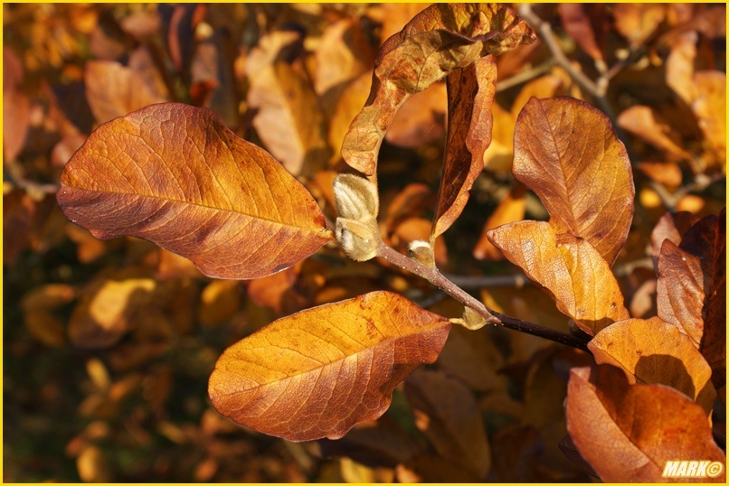Kolory Jesieni - Blog 14