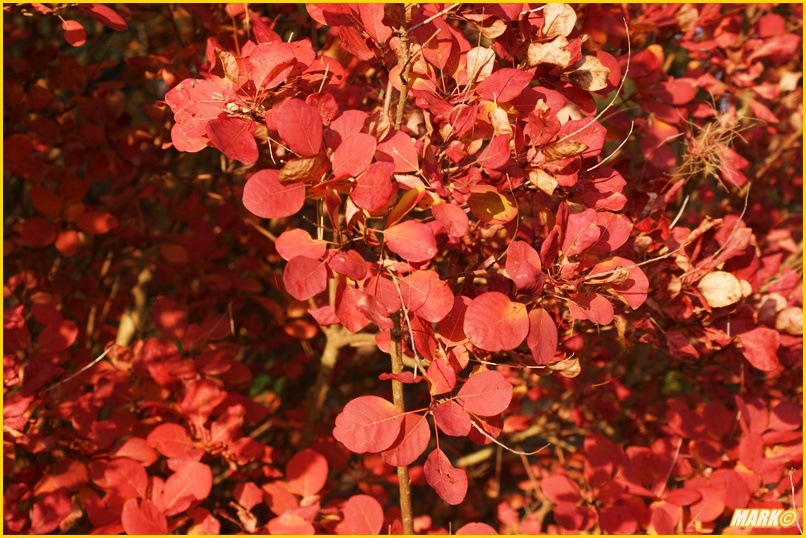 Kolory Jesieni - Blog 15