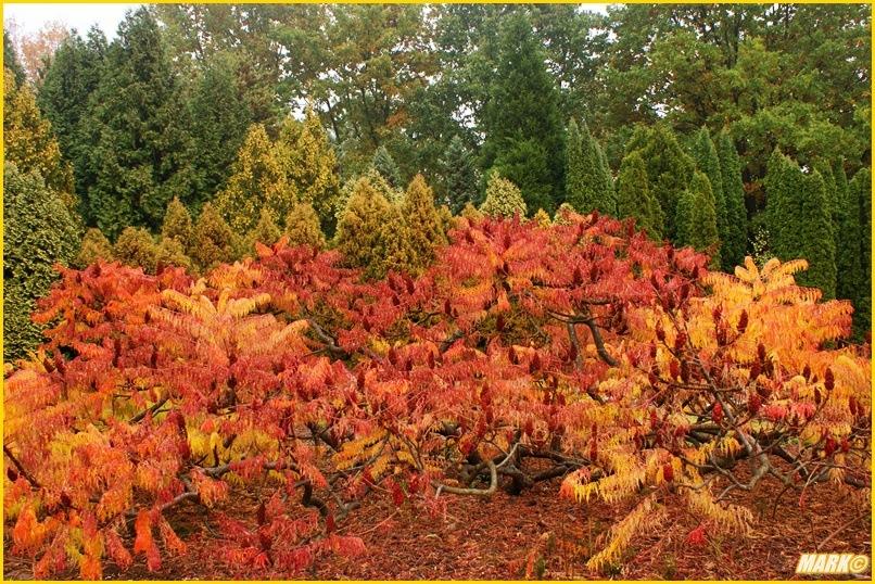 Kolory Jesieni - Blog 17