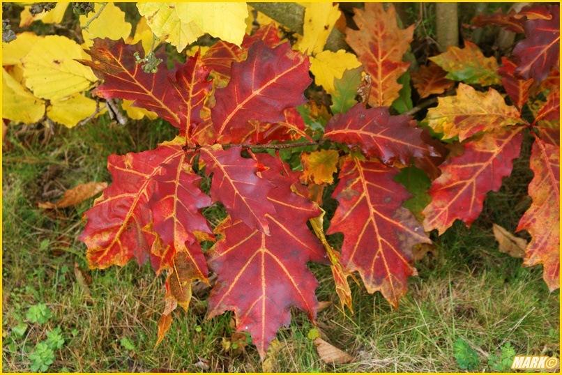 Kolory Jesieni - Blog 19
