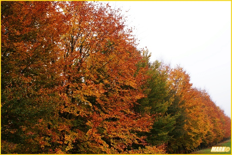 Kolory Jesieni - Blog 20