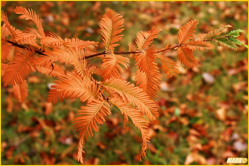 Kolory Jesieni - Blog 21