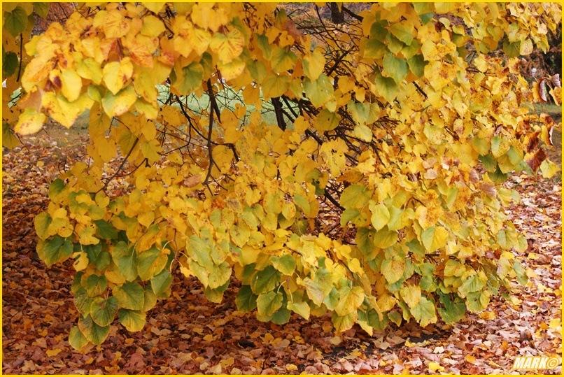 Kolory Jesieni - Blog 22