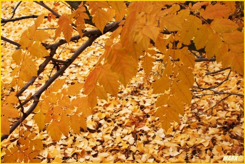 Kolory Jesieni - Blog 23