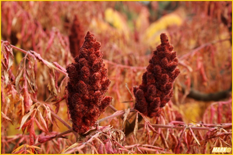 Kolory Jesieni - Blog 24