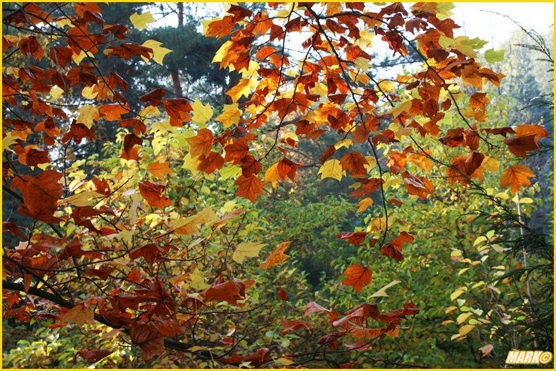 Kolory Jesieni - Blog 25