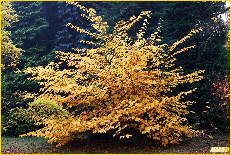 Kolory Jesieni - Blog 26