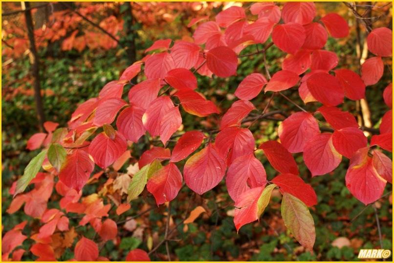 Kolory Jesieni - Blog 27