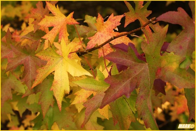 Kolory Jesieni - Blog 28