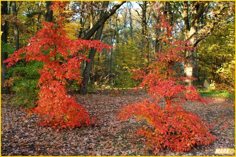 Kolory Jesieni - Blog 29