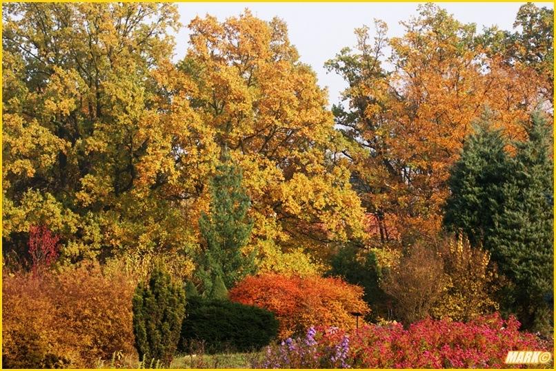 Kolory Jesieni - Blog 2