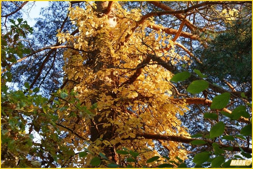 Kolory Jesieni - Blog  31