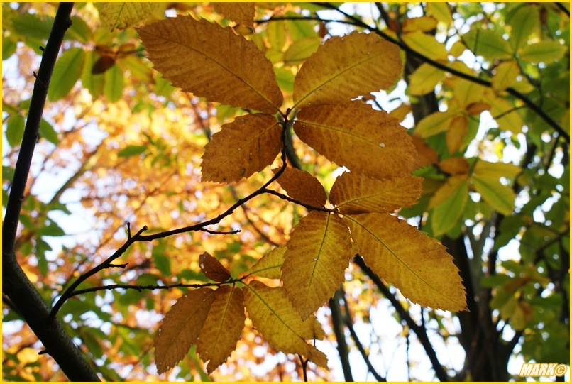 Kolory Jesieni - Blog 32