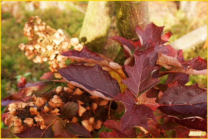 Kolory Jesieni - Blog 4