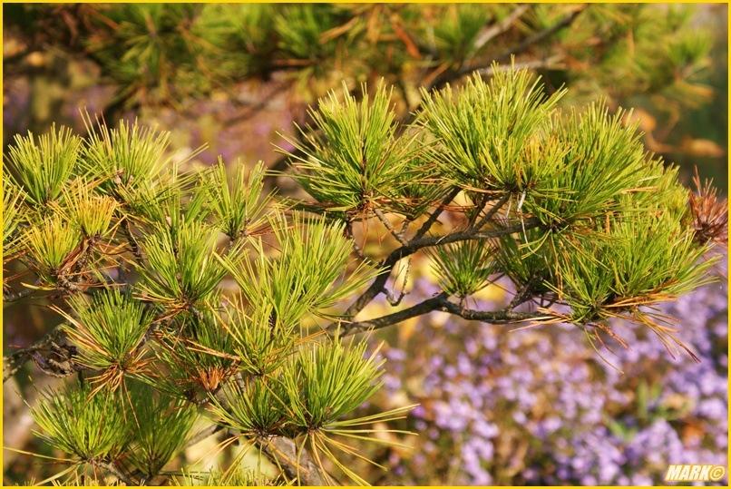 Kolory Jesieni - Blog 5