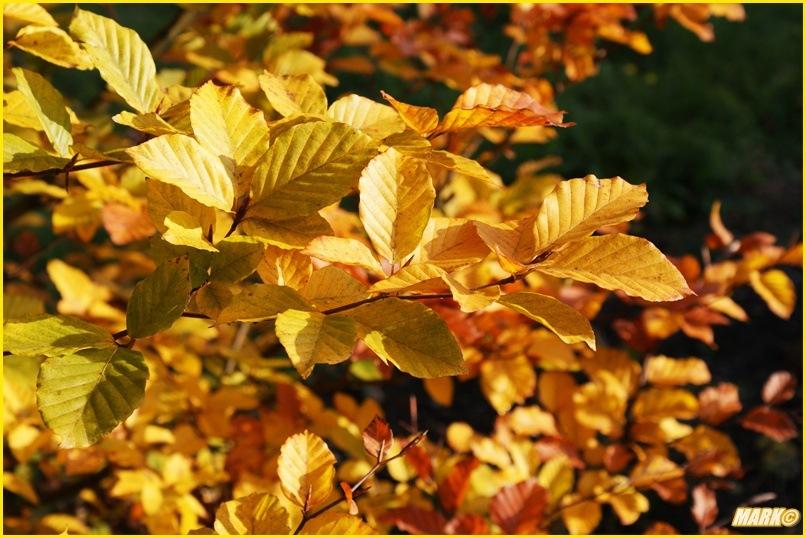 Kolory Jesieni - Blog 6