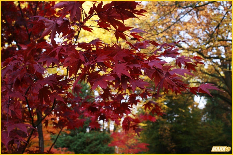 Kolory Jesieni - Blog 9