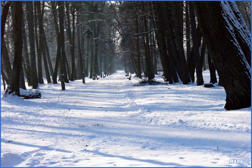 Zima w Parku (14)