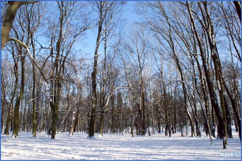 Zima w Parku (18)