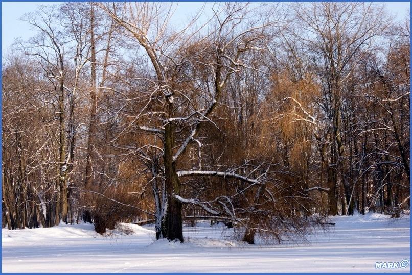 Zima w Parku (2)