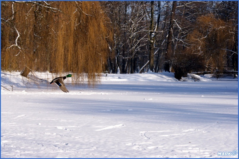 Zima w Parku (5)