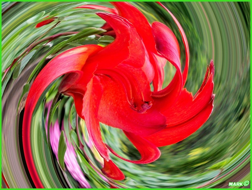Kwiat - Swirl 01