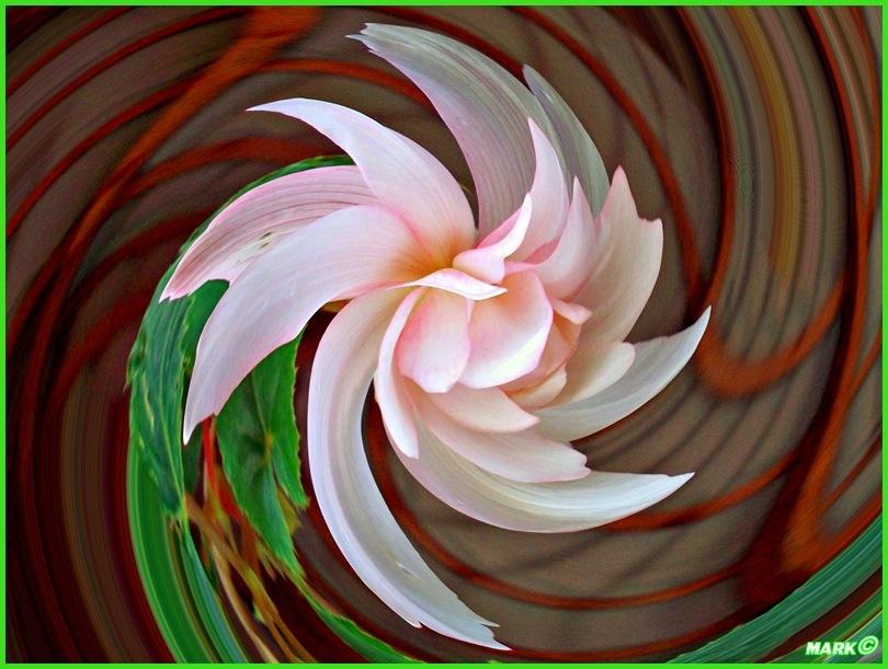 Kwiat - Swirl 04