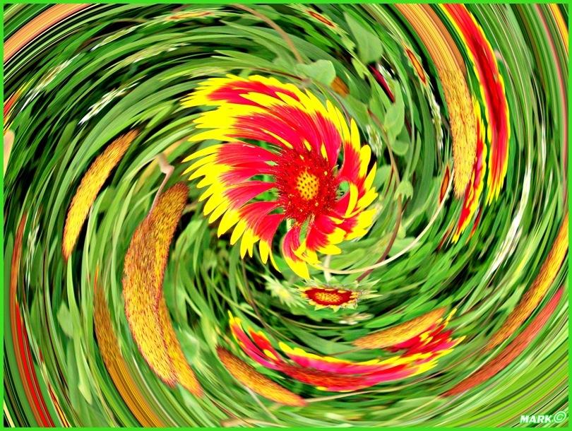 Kwiat - Swirl 06