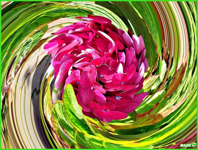 Kwiat - Swirl 07