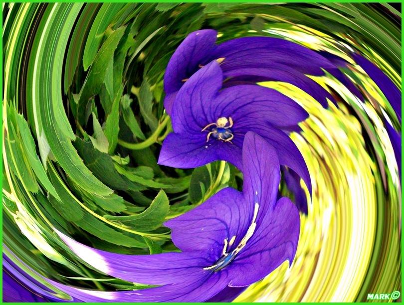 Kwiat - Swirl 08