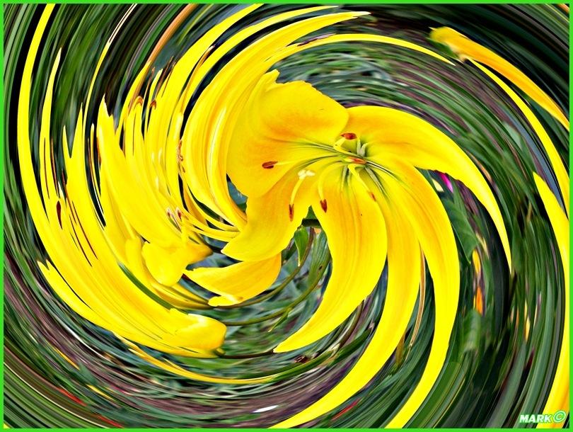 Kwiat - Swirl 10