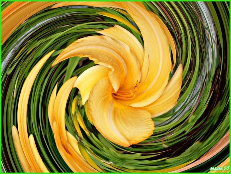 Kwiat - Swirl 11