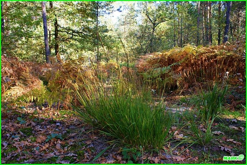 Jesień w Lesie - Blog (10)