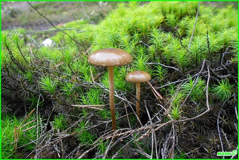 Jesień w Lesie - Blog (11)