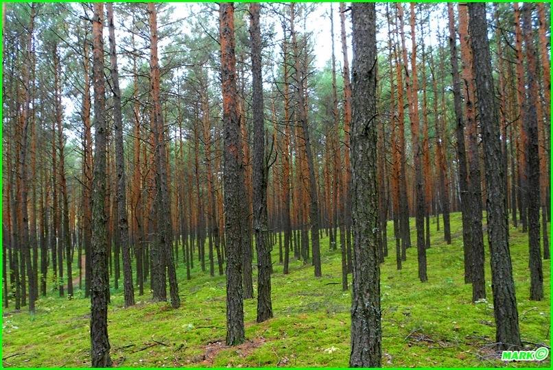Jesień w Lesie - Blog (12)