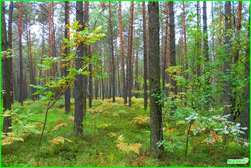 Jesień w Lesie - Blog (13)