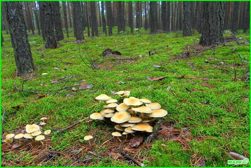 Jesień w Lesie - Blog (14)