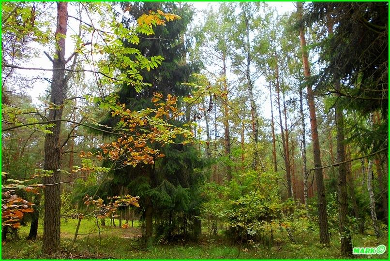 Jesień w Lesie - Blog (15)