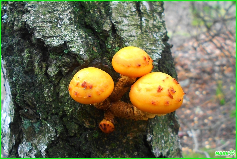 Jesień w Lesie - Blog (16)