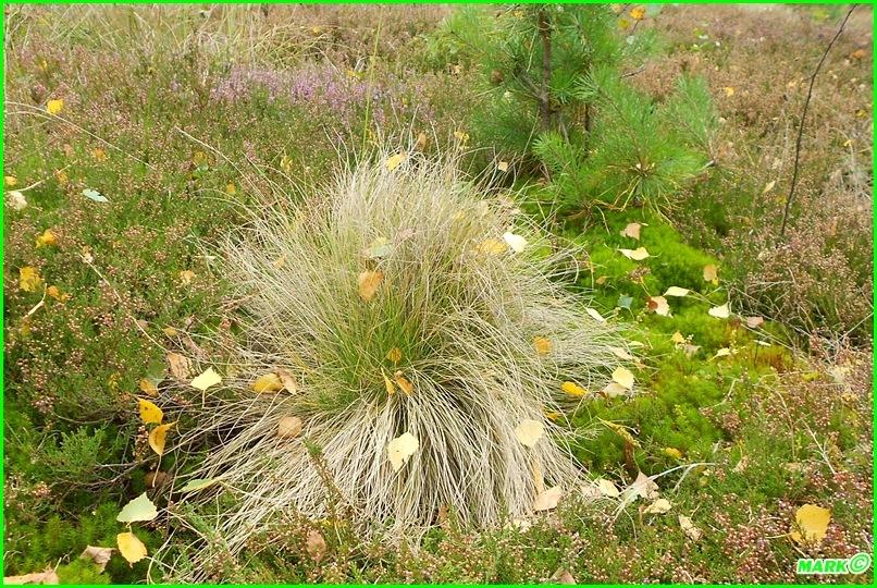 Jesień w Lesie - Blog (17)