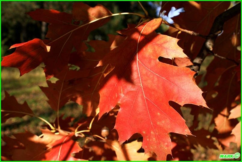 Jesień w Lesie - Blog (18)