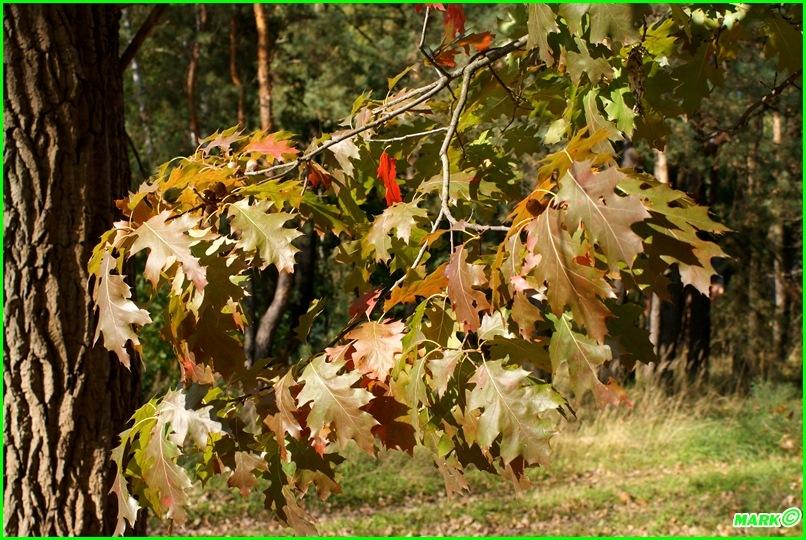Jesień w Lesie - Blog (19)