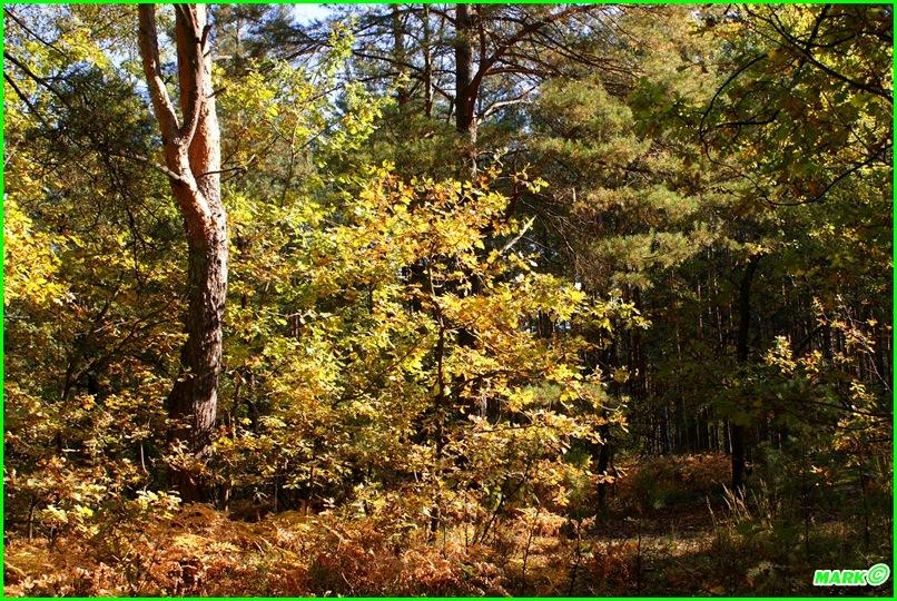 Jesień w Lesie - Blog (1)