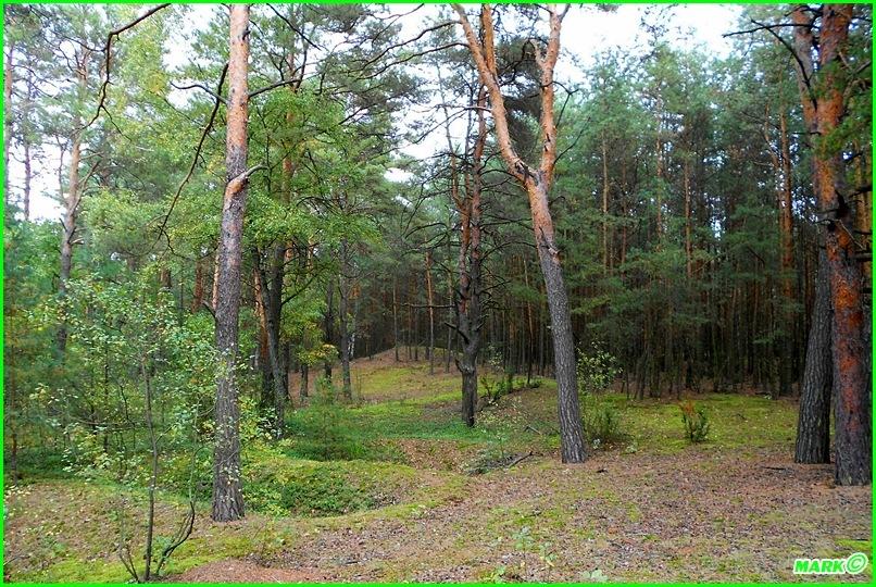 Jesień w Lesie - Blog (20)