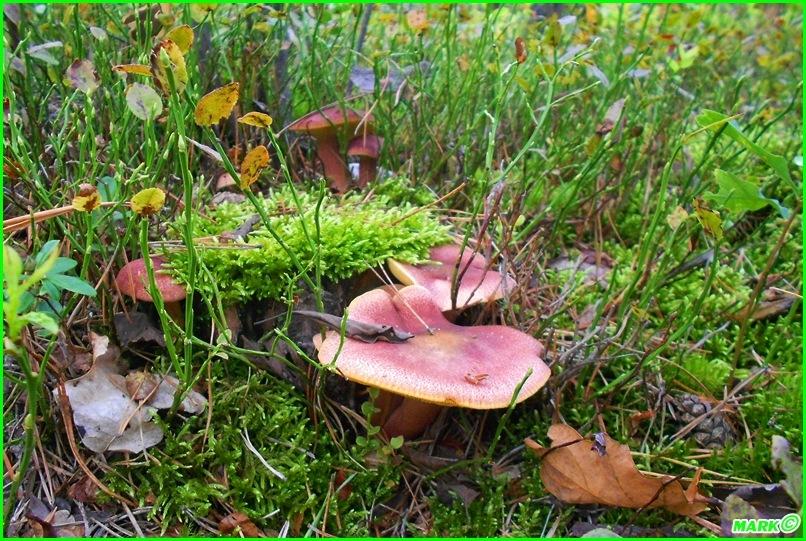 Jesień w Lesie - Blog (2)