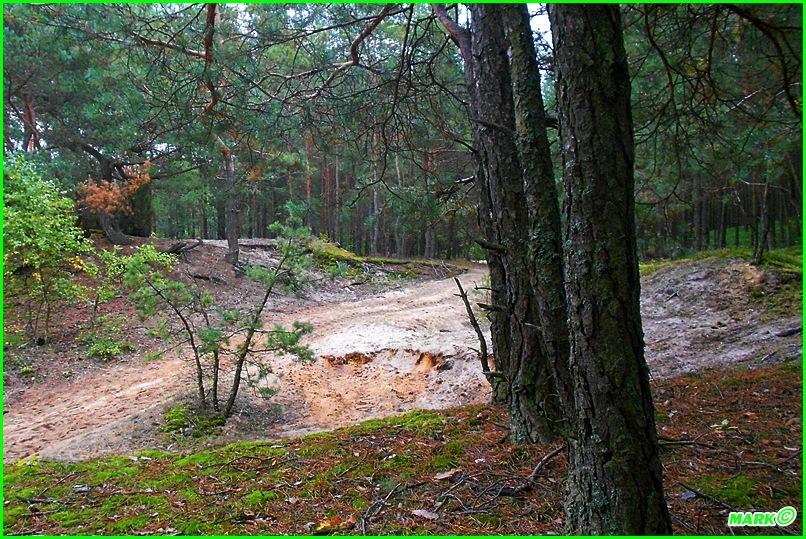Jesień w Lesie - Blog (3)